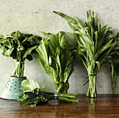 Still Life with Chinese Broccoli, Choy Sum, Water Spinach and Mustard Cabbage