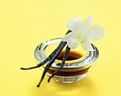 Vanilla Beans on a Bowl of Extract with White Orchid
