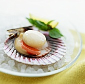 A Raw Scallop on the Shell with Basil and Lime on Rock Salt