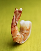 A shrimp on green background