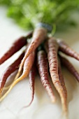 Red carrots, in a bunch