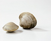 Two clams on white background