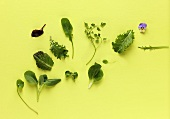 Assorted salad leaves, herbs and edible flower