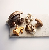 Six Types of Mushrooms on a Piece of Marble