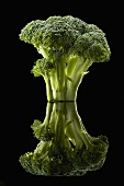 Broccoli on Black with Reflection
