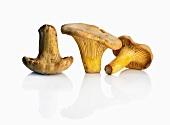 Three Chanterelle Mushrooms