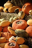 Assorted Types of Squash on Hay Bales