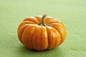 A Mini Pumpkin