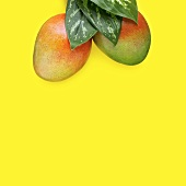 Mangos with Leaves on a Yellow Background