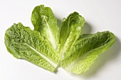 Several romaine lettuce leaves on white background