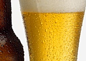 Close Up of Wet Glass of Light Beer and Wet Beer Bottle