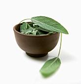 Fresh sage leaves in brown bowl