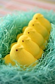 Easter sweets: yellow marshmallow chicks in blue nest