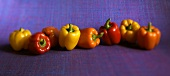 Yellow, Red and Orange Bell Peppers on Blue Background