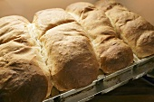 Four loaves of freshly baked bread
