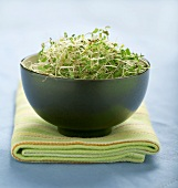 Fresh alfalfa sprouts in blue pottery bowl