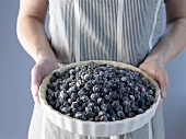 Person holding unbaked blueberry pie