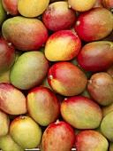 Many whole mangos (full-frame)