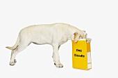 Hund frisst Hundebiscuits aus gelber Schachtel