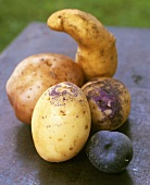 Still life with various types of potatoes