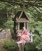 A lily on a bird house
