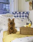 Breakfast tray and small dog on bed