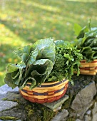 Assorted brassicas in baskets