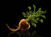 Single Golden Beet on a Black Background