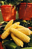 Shucked Corn with Orange Baskets of Corn Outdoors