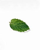A Single Mint Leaf
