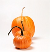 Three Pumpkins of Varying Sizes in a Row; White Background