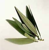 Several bay leaves