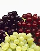 Still Life: Assorted Grapes