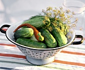 Fresh pickling cucumbers with chili pepper & dill in strainer