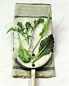 Various lettuce leaves on a wooden board