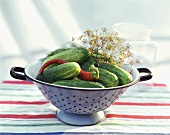Fresh pickling cucumbers with chili pepper & dill in colander