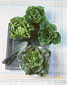 Various Lettuce Heads and Trowel