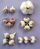 Garlic bulbs, arranged separately