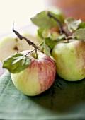 Fresh apples with stalks and leaves on tea towel