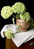 White hydrangeas in rustic terracotta pot
