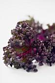 Close Up of Red Kale Leaf