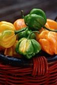 Basket of Dutch Bonnet Peppers, Close Up