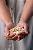 Hands Holding Many Soy Beans