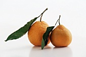 Two Satsuma Tangerines with Leaves on a White Background