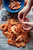 Hands Peeling Whole Boiled Shrimp Over Newspaper