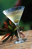 A Single Martini with an Olive, Tropical Plant