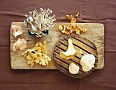 Assorted Mushroom Varieties on a Wooden Board