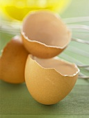 Close Up of Brown Egg Shells