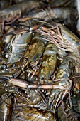 A Pile of Fresh Crawfish