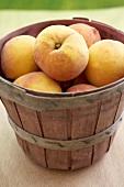 Basket of Fresh Georgia Peaches